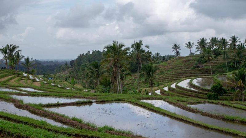 Instagram Lies About the Bali's Famous Tegalalang Rice Terrace, Go Here Instead