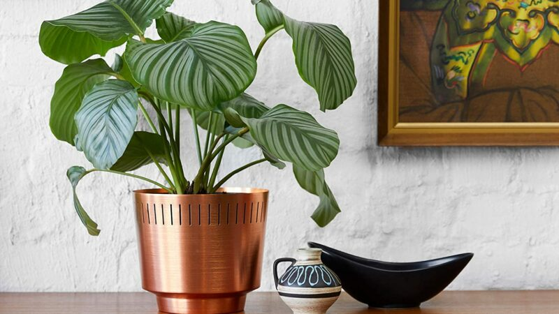 Rose Gold Gifts For The Plant Obsessed